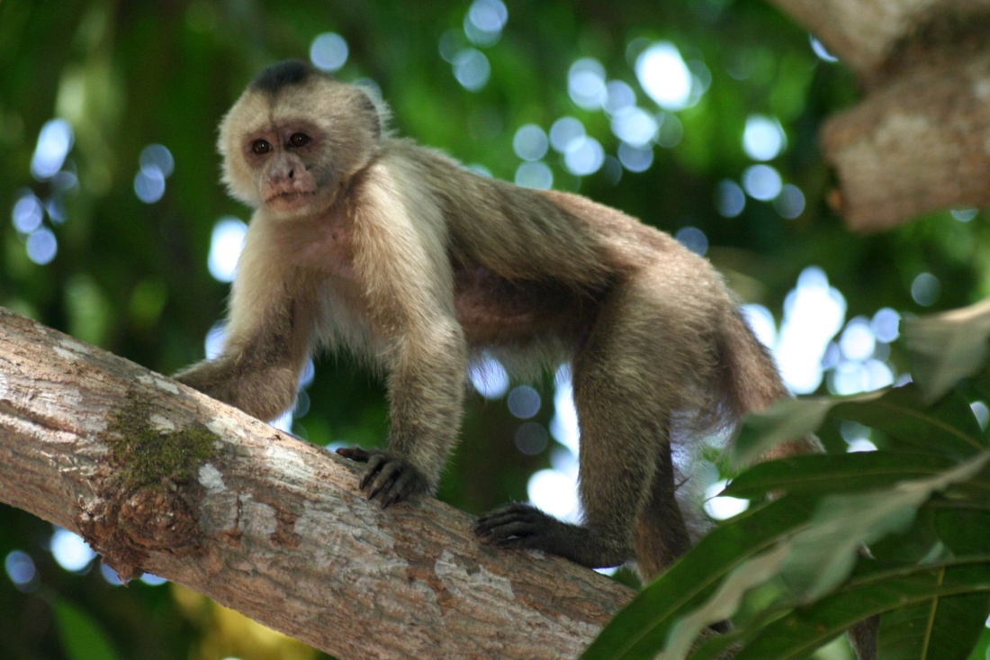 monkey, primate, wildlife, jungle, tree, cute, rainforest, nature