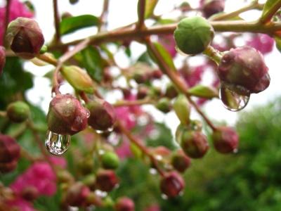 nature, humide, branche, arbre, feuilles, pluie, fleur, flore, jardin, rosée