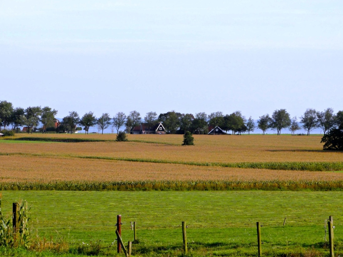agriculture, landscape, farm, field, tree, rural, countryside, land
