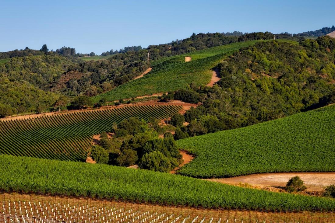 vineyard, agriculture, viticulture, farm, grapevine, landscape, land