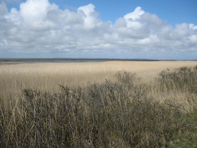 landskab, vand, felt, hvede, sommer, landdistrikter, landbrug, sky