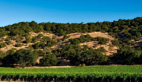 l'agriculture, vignoble, paysage, arbre, herbe, ciel, été, rural, pré