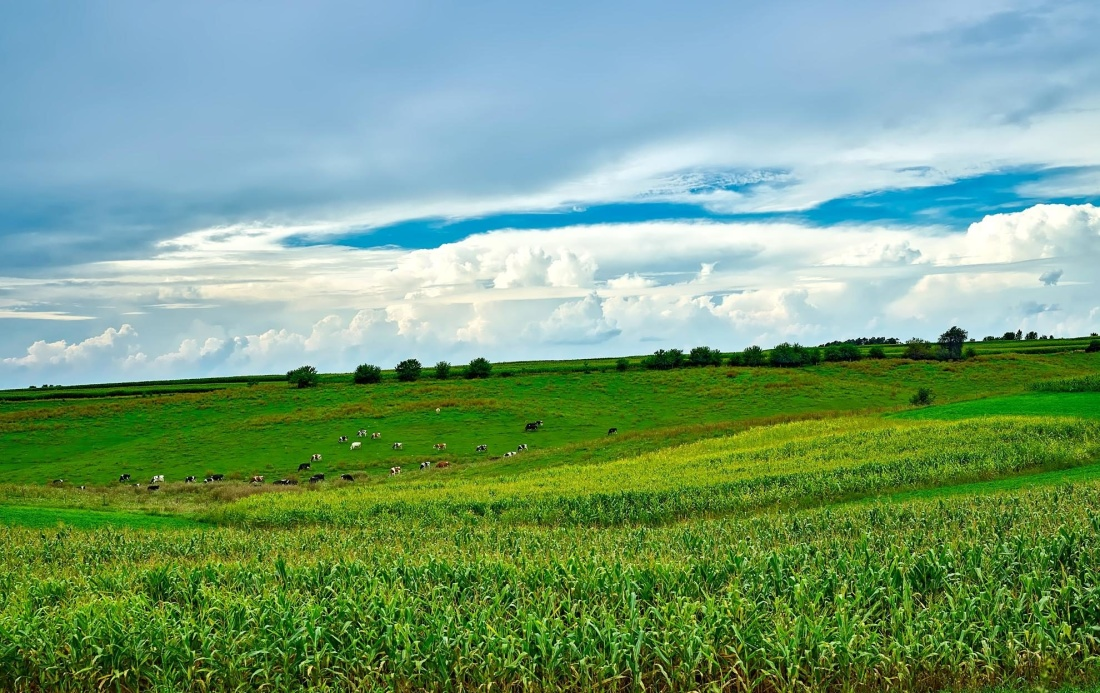 field, agriculture, rural, landscape, farm, grass, countryside, nature