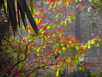 leaf, tree, nature, flora, garden, branch, autumn