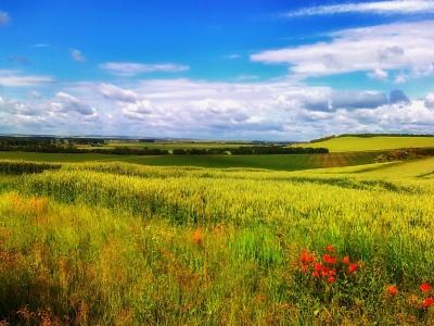 pole, krajina, příroda, řepka, řepky, tráva