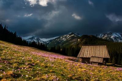 nature, bois, paysage, montagne, Prairie, colline