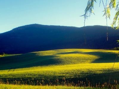 Landschaft, Natur, Baum, Landwirtschaft, Himmel, Rasen, Feld, Hügel