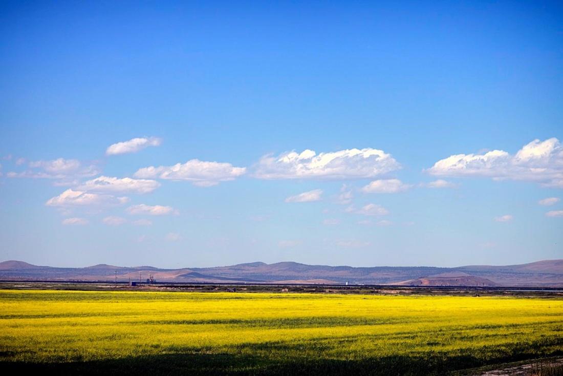 landscape, field, sky, nature, oilseed, rapeseed, seed, fruit