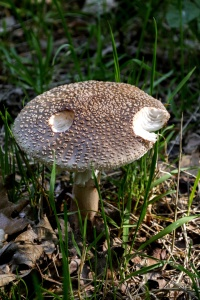 nature, fungus, mushroom, grass, wood, wild
