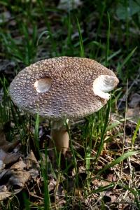 prirode, gljiva, gljiva, trave, drva, divlja