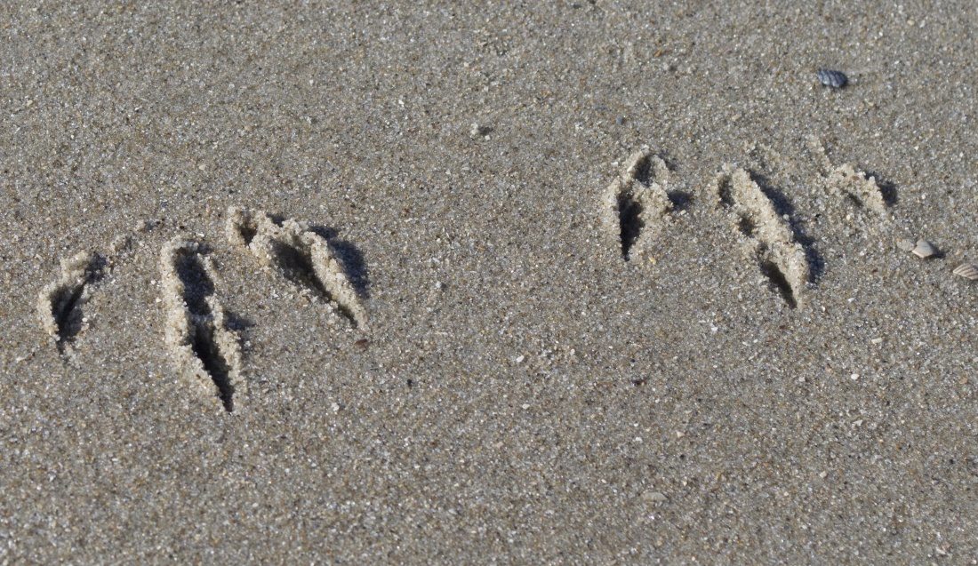 sand, beach, seashore, footprint, foot, shore, footstep