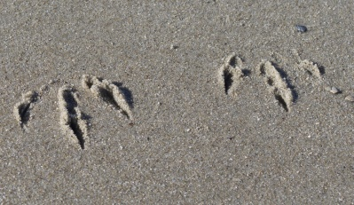 sand, beach, seashore, footprint, foot, shore, footstep