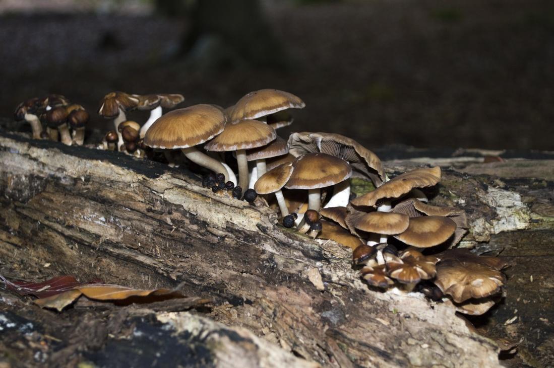 fungus, mushroom, nature, wood, moss, wildlife, daylight, environment
