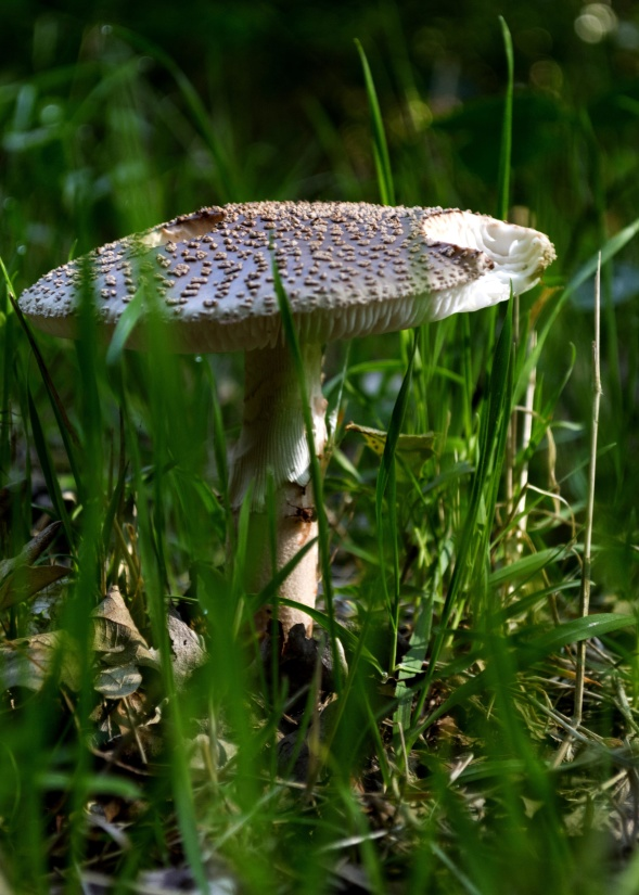 nature, grass, wild, mushroom, forest, fungus
