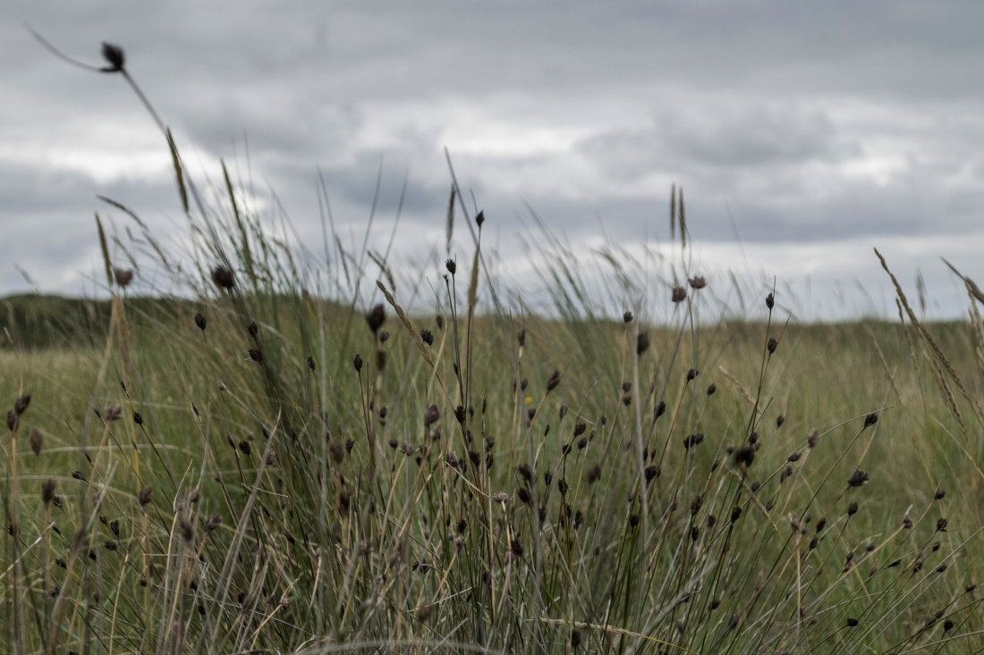grass, field, nature, landscape, wheat, summer, sun, rural, sky, rural, agriculture