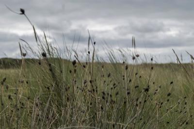 cỏ, lĩnh vực, thiên nhiên, phong cảnh, lúa mì, mùa hè, mặt trời, nông thôn, nông nghiệp nông thôn, trên bầu trời,