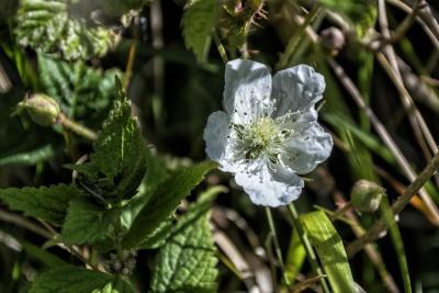 nature, leaf, flora, flower, garden, plant, herb, blossom