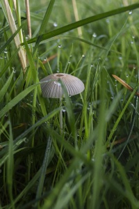 grass, nature, flora, summer, field, mushroom, dew, wet