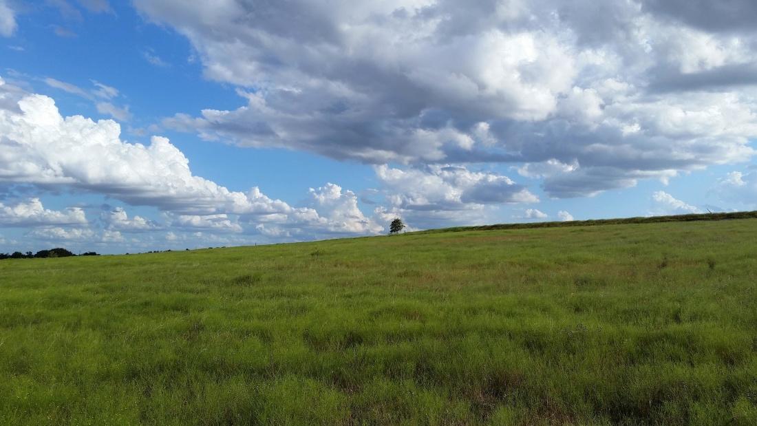 landskabet, himlen, græs, græsarealer, natur, felt, jord, eng
