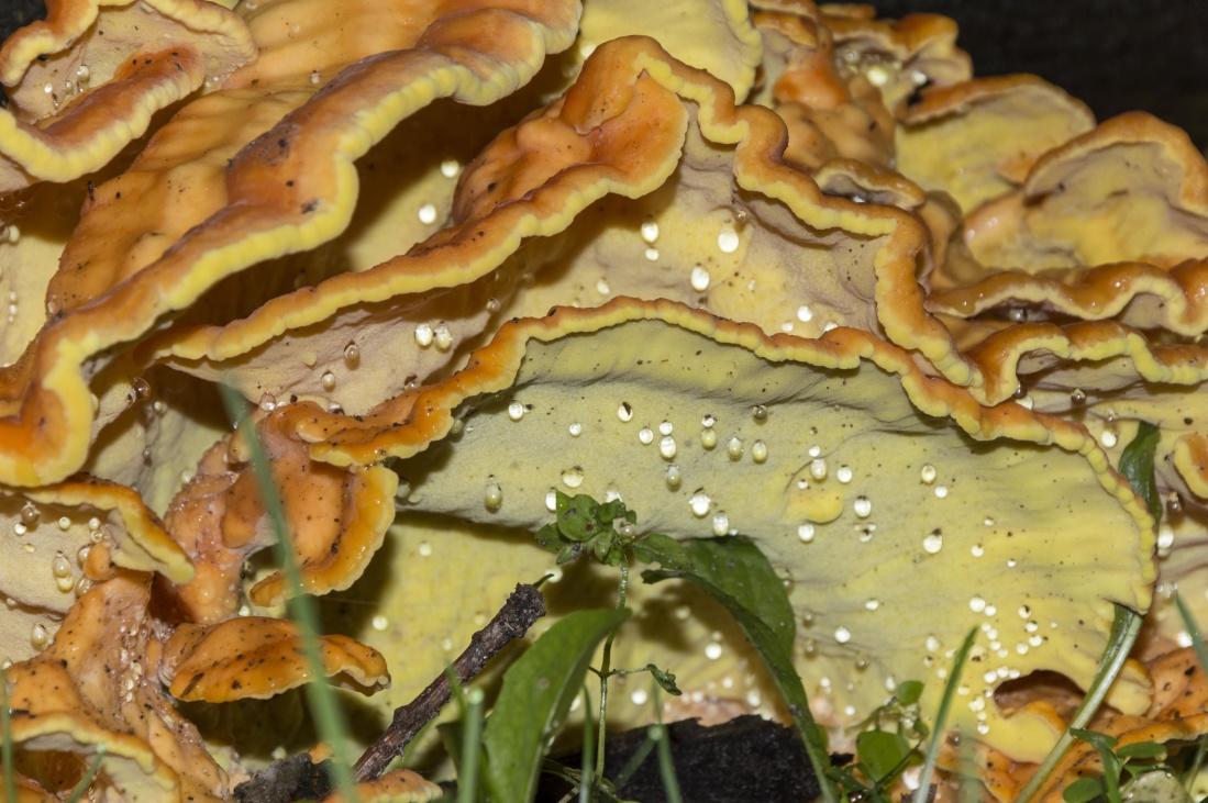 food, fungus, mushroom, worm, invertebrate