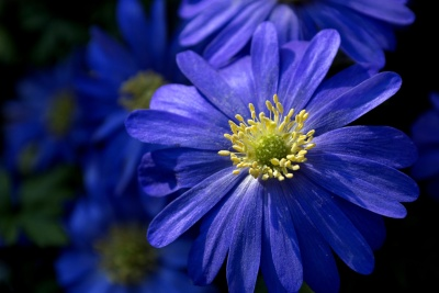 pollen, flower, nature, flora, summer, garden, petal, leaf, plant