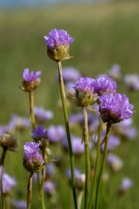 flower, nature, summer, garden, grass, leaf, environment, wild, wildflower