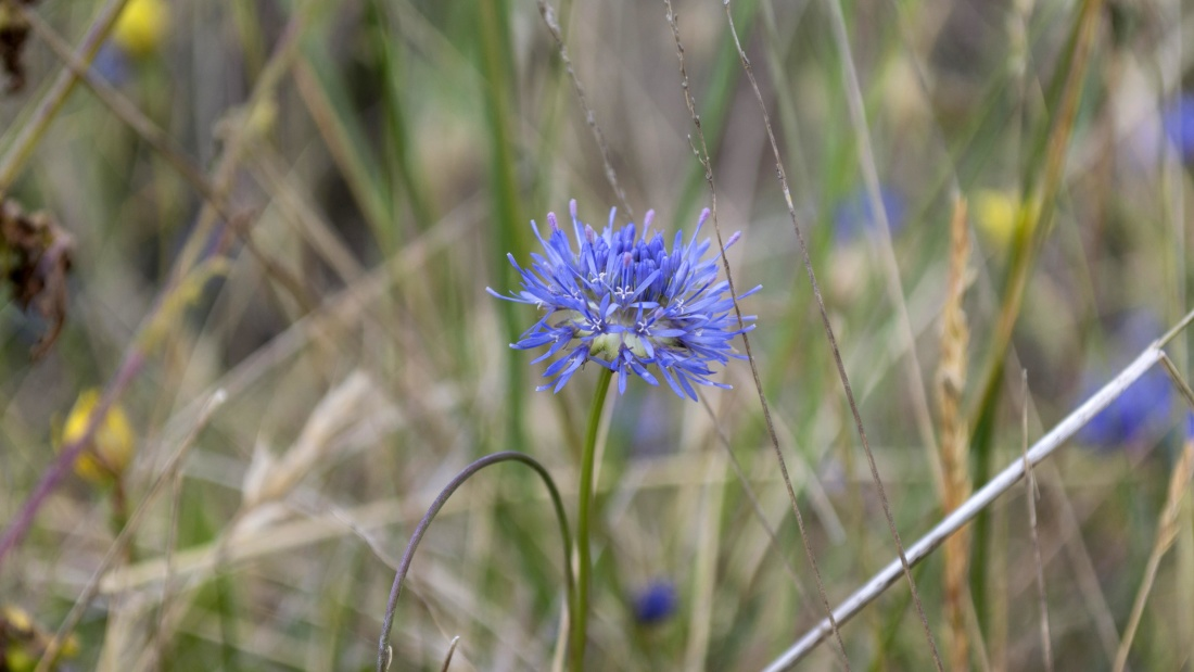 nature, flower, field, grass, flora, summer