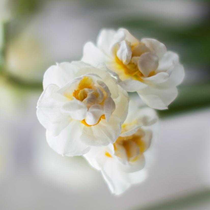flower, nature, flora, beautiful, petal, rose