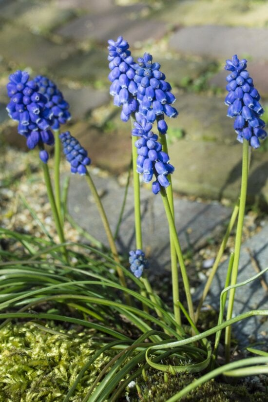 nature, flora, flower, grass, summer, garden, leaf, field, hyacinth, blossom