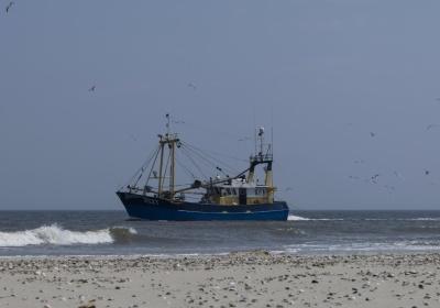 havet, ocean, vand, vandscootere, skib, båd, seashore, strand, strand