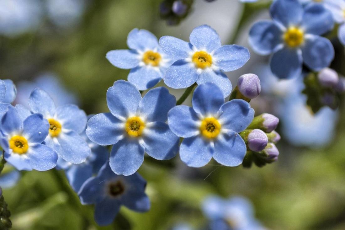 flower, nature, flora, garden, leaf, petal, plant, blossom, herb