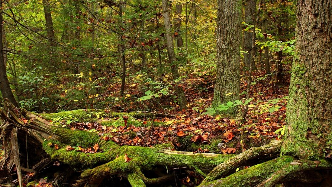 wood, leaf, tree, nature, landscape, moss, forest