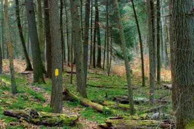 wood, tree, nature, landscape, leaf, environment, forest