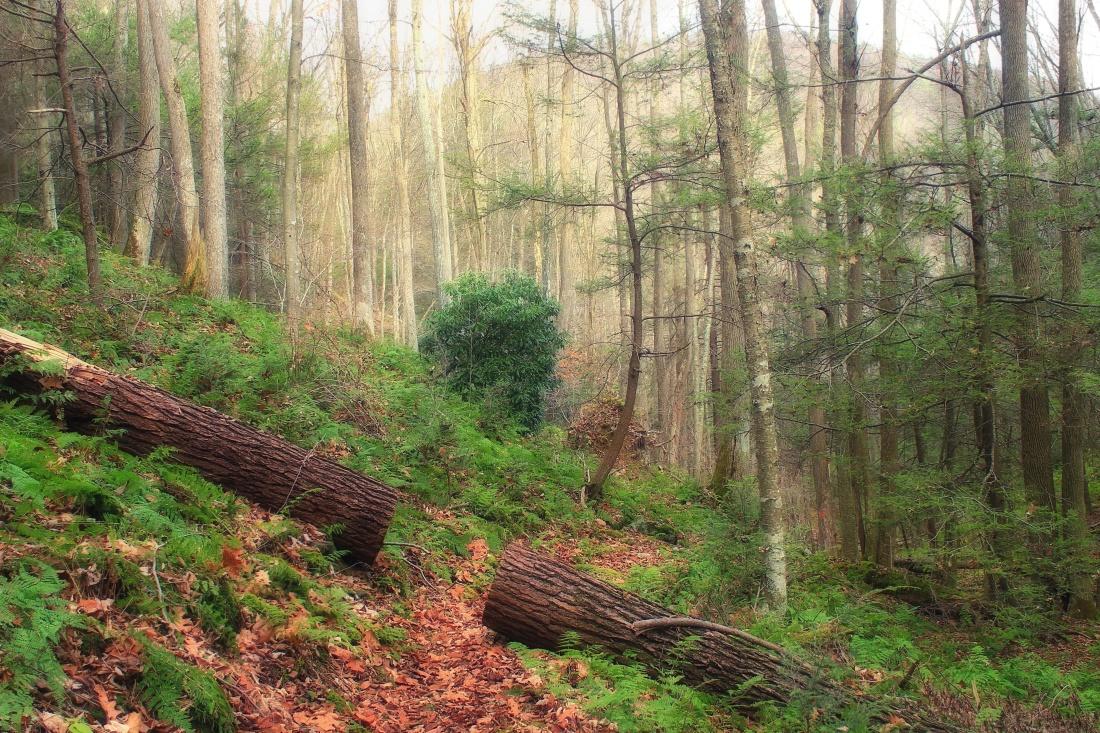 wood, tree, nature, spring, landscape, leaf, environment, forest