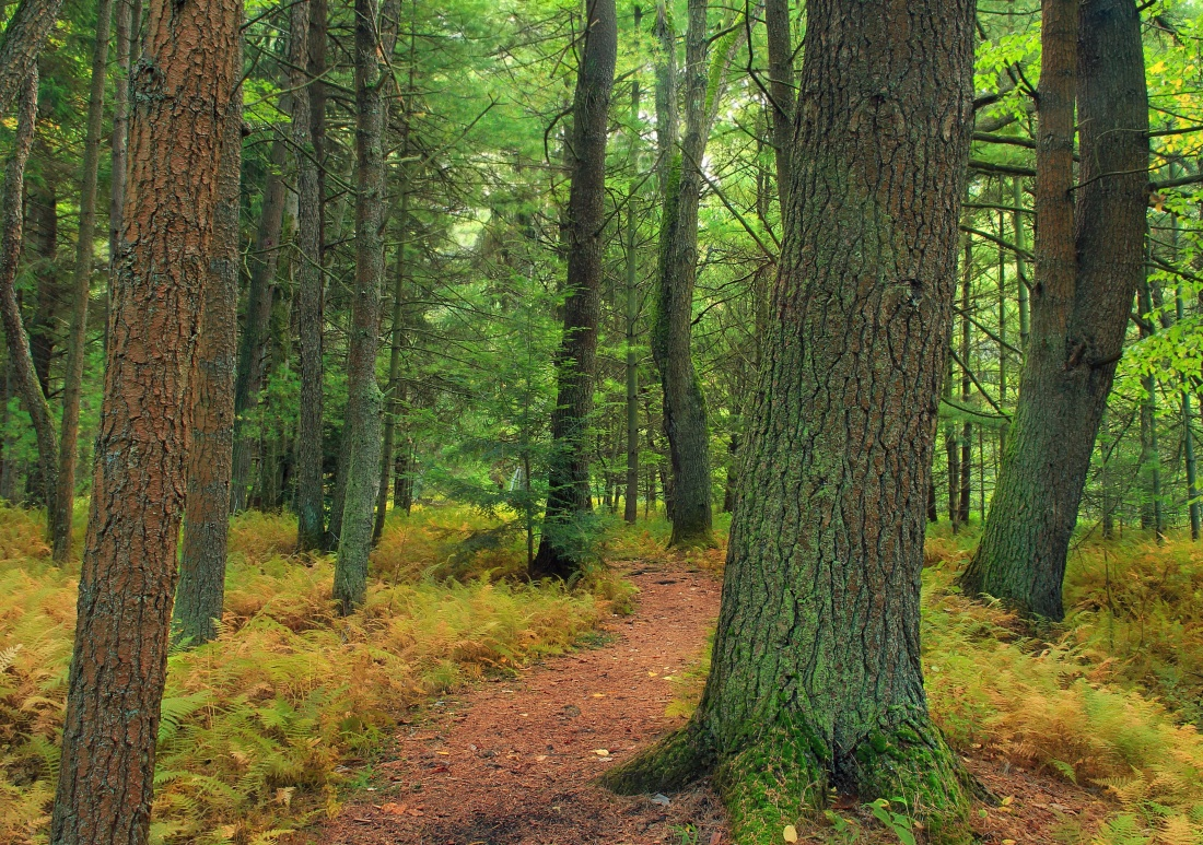 wood, tree, nature, landscape, summer, leaf, environment, forest, pathway