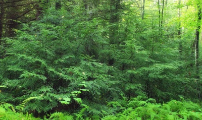 wood, nature, leaf, landscape, tree, fern, environment, plant