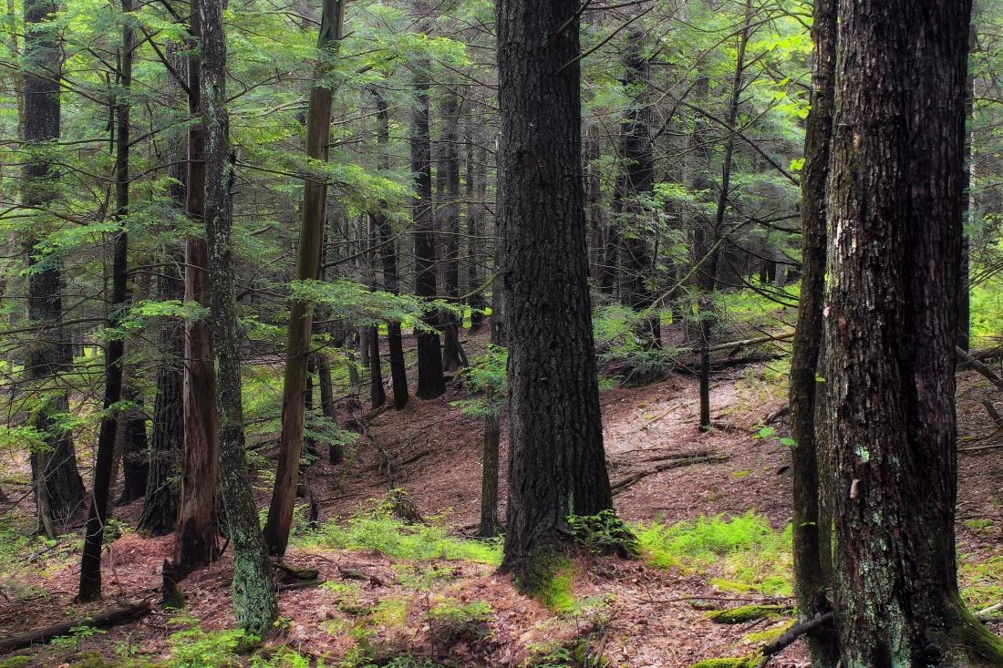 wood, tree, landscape, nature, leaf, environment, oak, forest