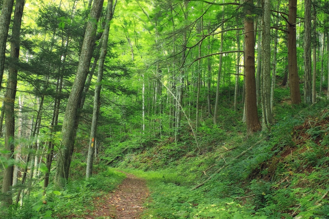 wood, nature, tree, pathway, summer, landscape, leaf, environment, forest