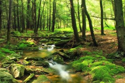 drvo, prirode, list, Rijeka, lišaja, krajolik, drvo, mahovina, okoliš, šuma