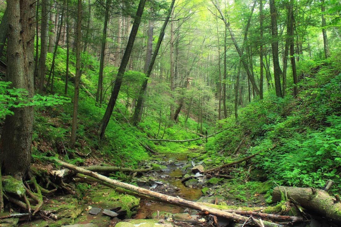 wood, nature, leaf, landscape, tree, moss, forest