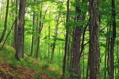 legno, natura, paesaggio, foglia, albero, conifera, alba, foresta, corteccia