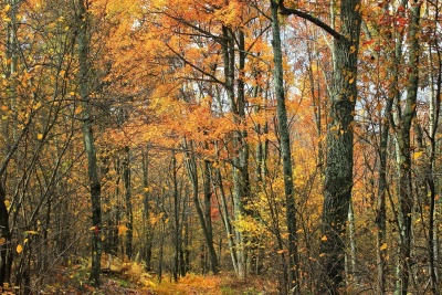 wood, leaf, tree, landscape, nature, november, autumn, forest