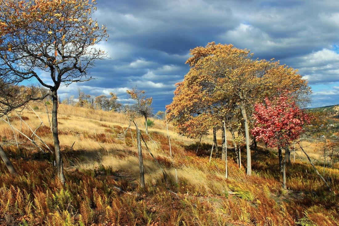 tree, landscape, nature, leaf, wood, autumn, hill, colorful, brnach