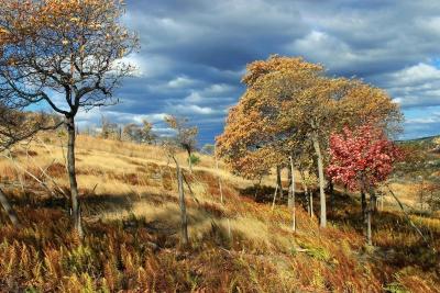δέντρο, τοπίο, φύση, φύλλα, ξύλο, φθινόπωρο, hill, πολύχρωμη, brnach