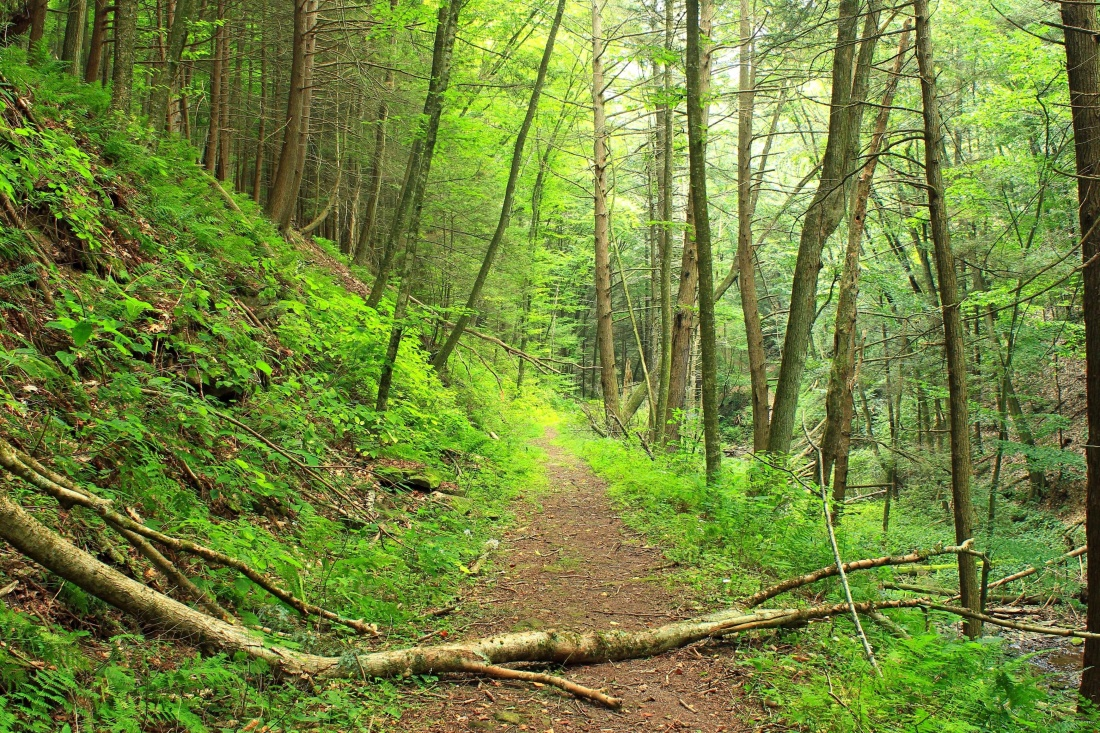 wood, nature, tree, landscape, leaf, environment, trail, forest