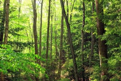 wood, nature, landscape, fern, moss, leaf, tree, environment, forest
