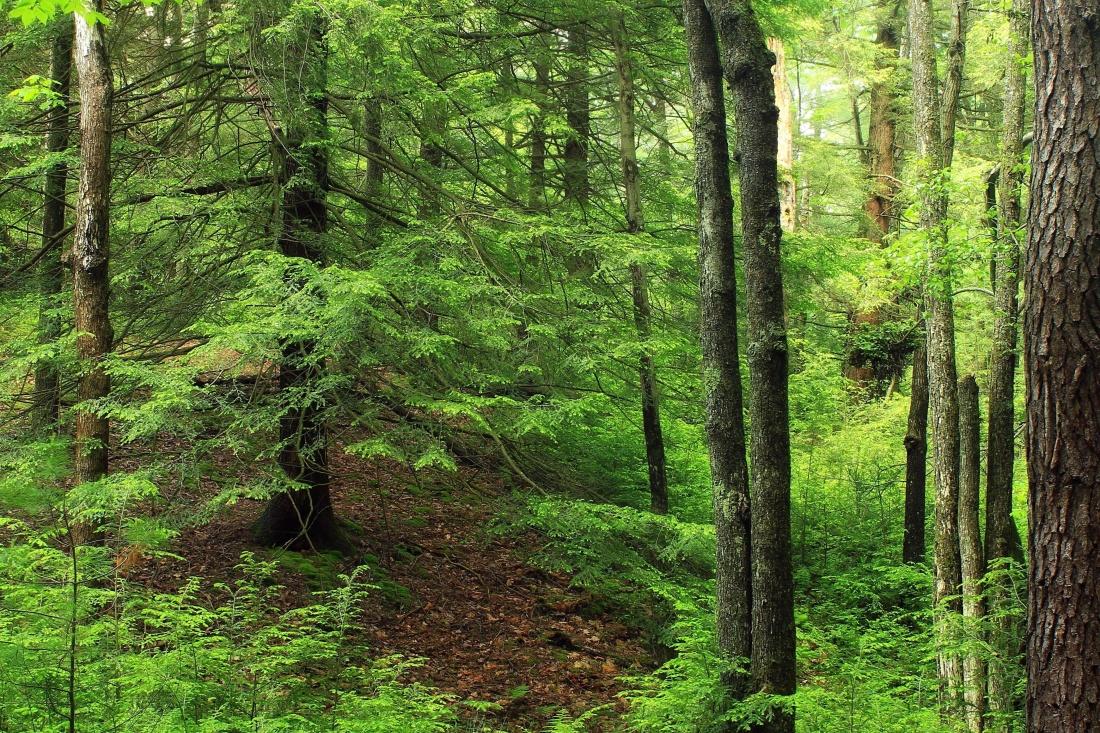 wood, nature, landscape, fern, leaf, tree, environment, forest