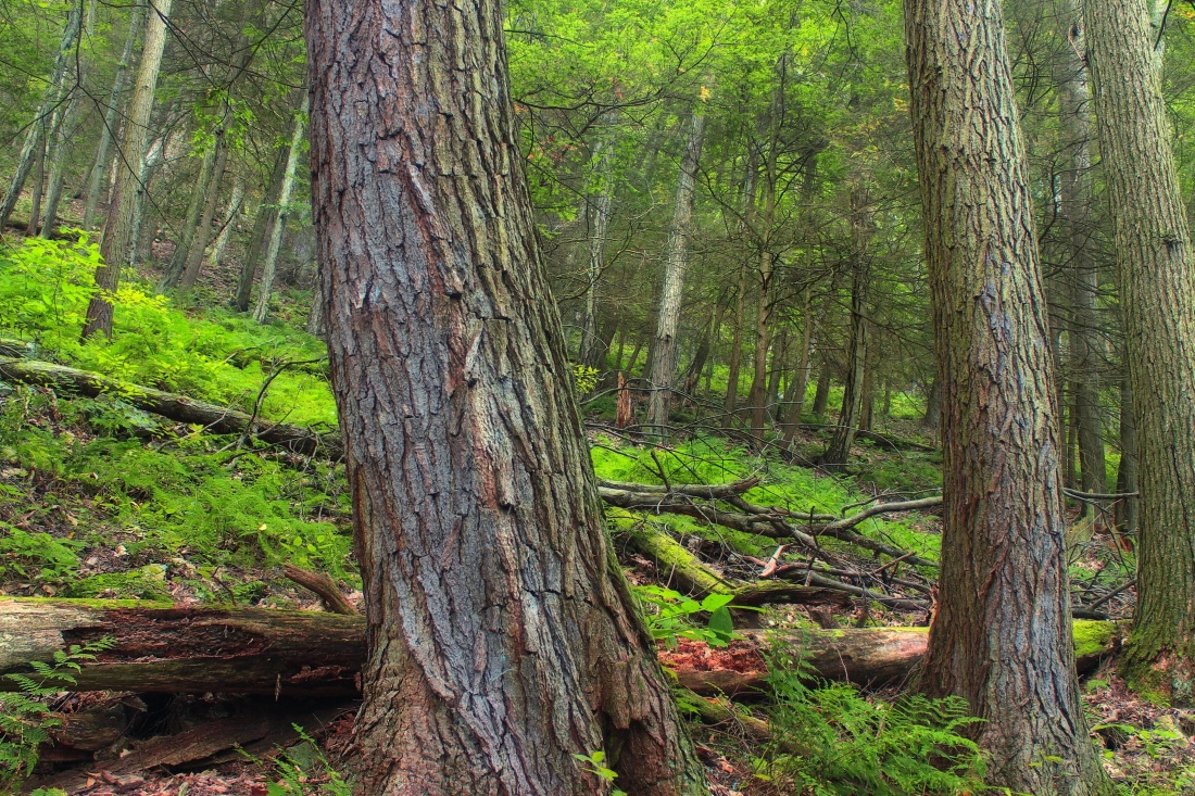 wood, tree, nature, landscape, leaf, forest, grass, moss, pine, environment, conifer