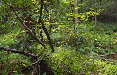 wood, tree, nature, leaf, landscape, flora, environment, forest