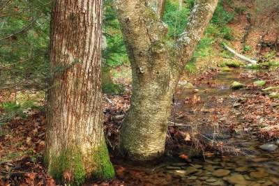 wood, environment, bark, water, tree, landscape, forest, oak, nature, landscape, flora